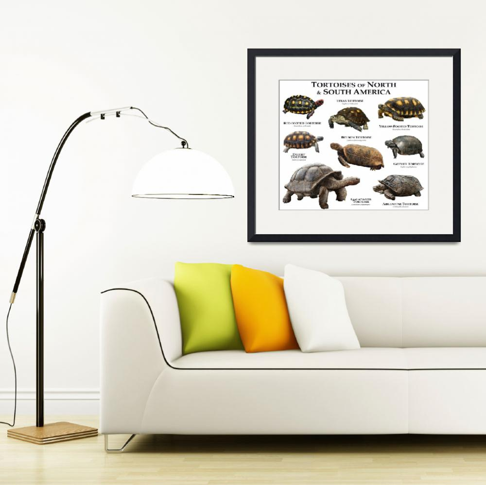 """""""Tortoises of North and South America&quot  (2014) by inkart"""
