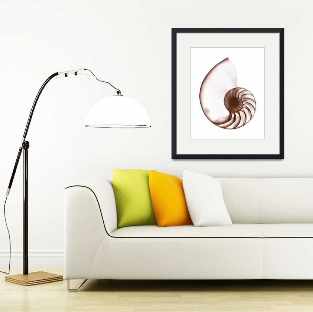 """""""Chambered Nautilus Shell&quot  (1973) by DennisMash"""