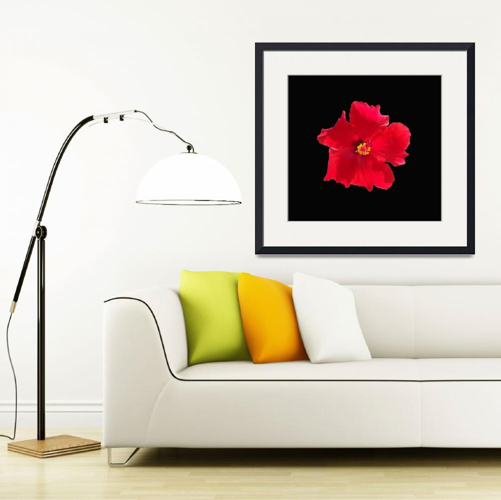 """""""Dramatic single red Hibiscus on black&quot  (2018) by NormaStampSunnyDaze"""
