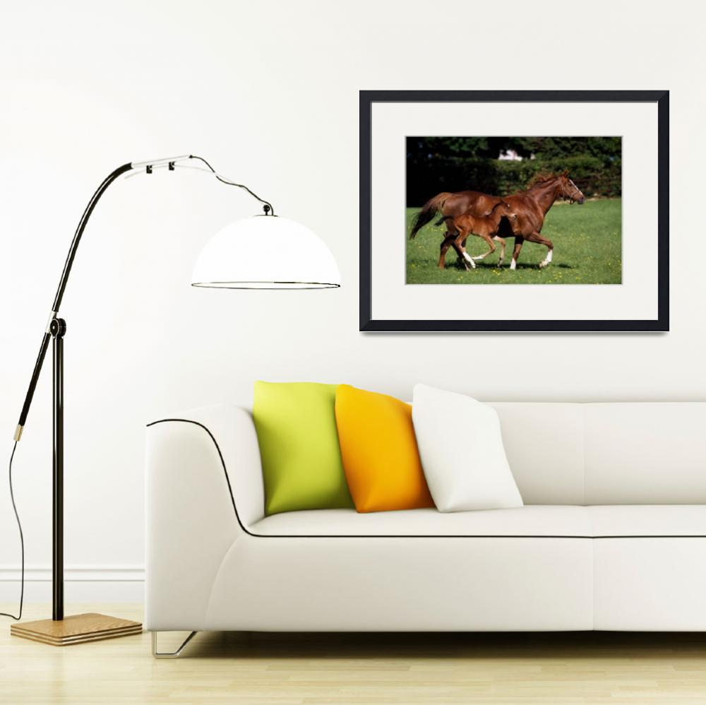 """Thoroughbred Mare And Foal Galloping, Ireland&quot  by DesignPics"