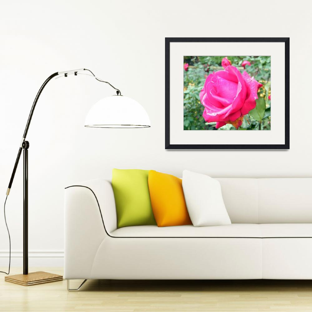 """""""Rose&quot  (2008) by hudsons_photography"""