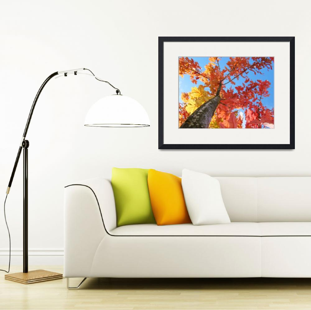 """""""Fall art Looking Up Tree Blue Sky Orange Leaves&quot  (2010) by BasleeTroutman"""