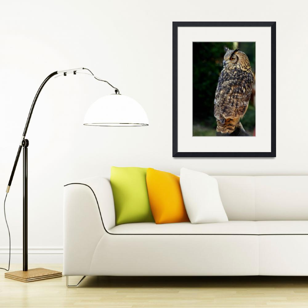 """""""European Eagle Owl&quot  (2008) by loversdream"""