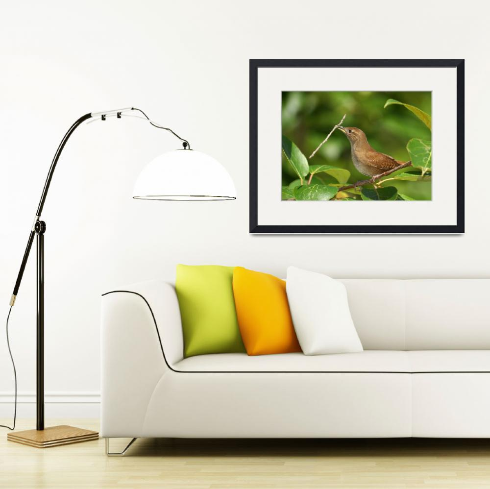 """""""House Wren With Stick&quot  by birds2flight"""