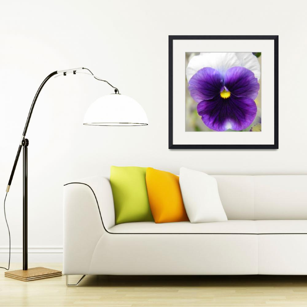 """""""purple and white flower  2&quot  (2010) by sb1photography"""
