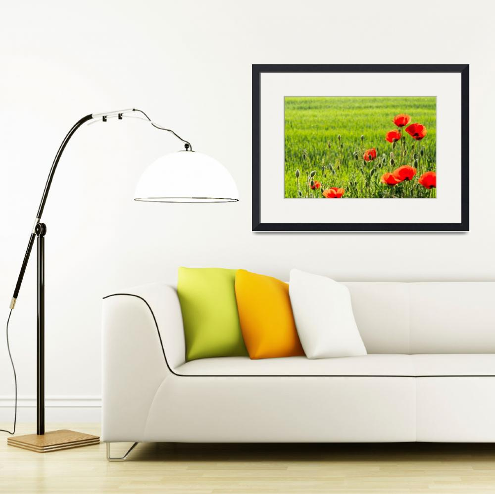 """""""Beautiful red poppies in springtime""""  (2016) by creative_photography"""