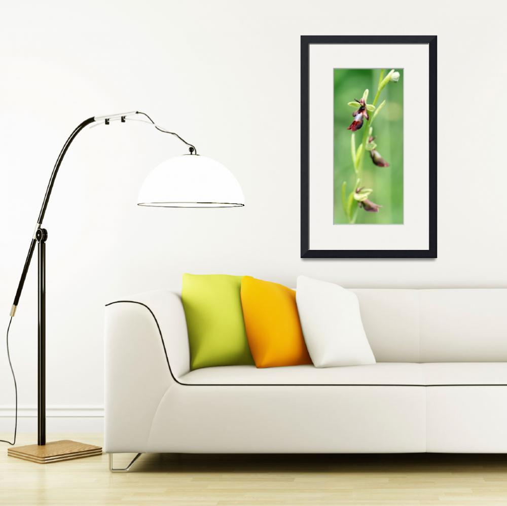 """""""Fly orchid 8&quot  by rhallam"""
