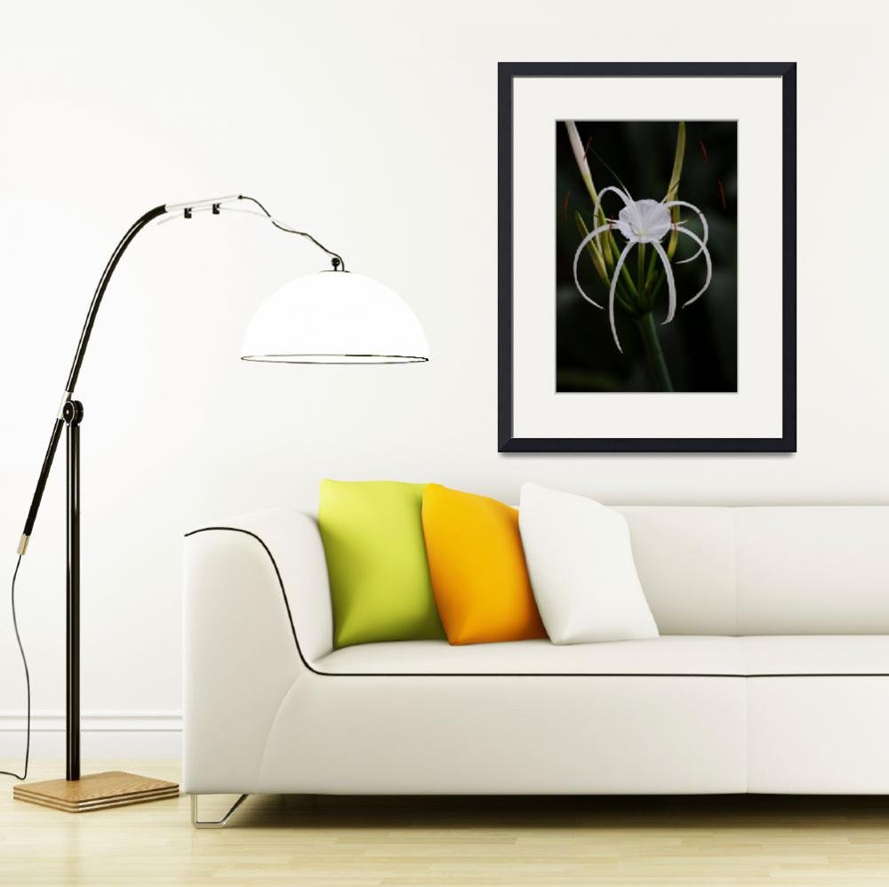 """""""Spider Lily&quot  (2011) by thepathtraveller"""