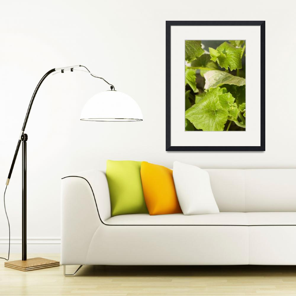 """""""A plant with very green large leaves&quot  by scenicphotos"""