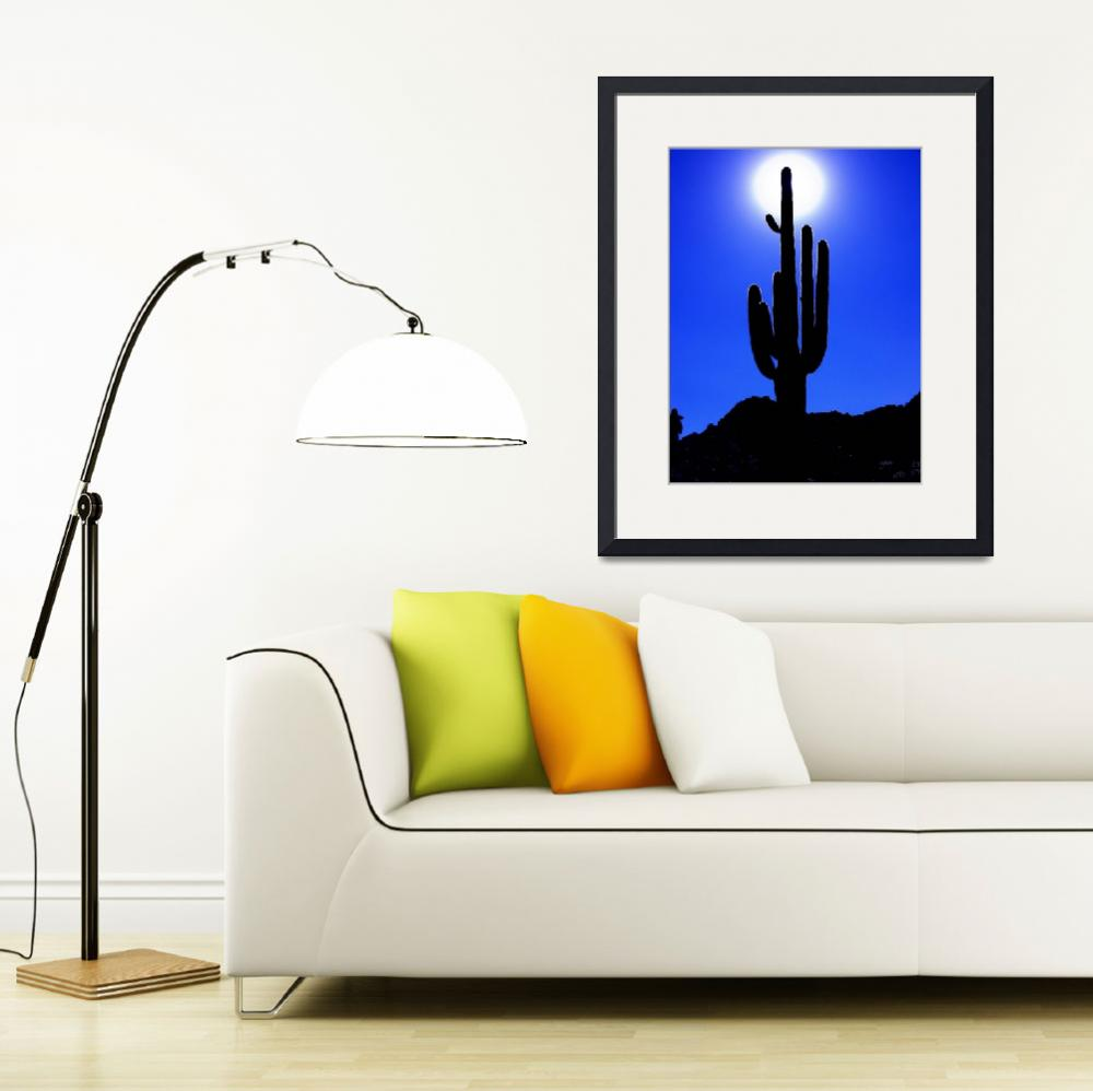 """""""Cactus in the sun (with help from Nikon View)&quot  by Damon"""