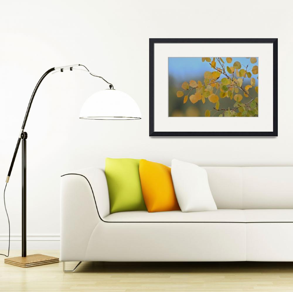 """""""Yellow aspen&quot  (2011) by PhotoDombach"""