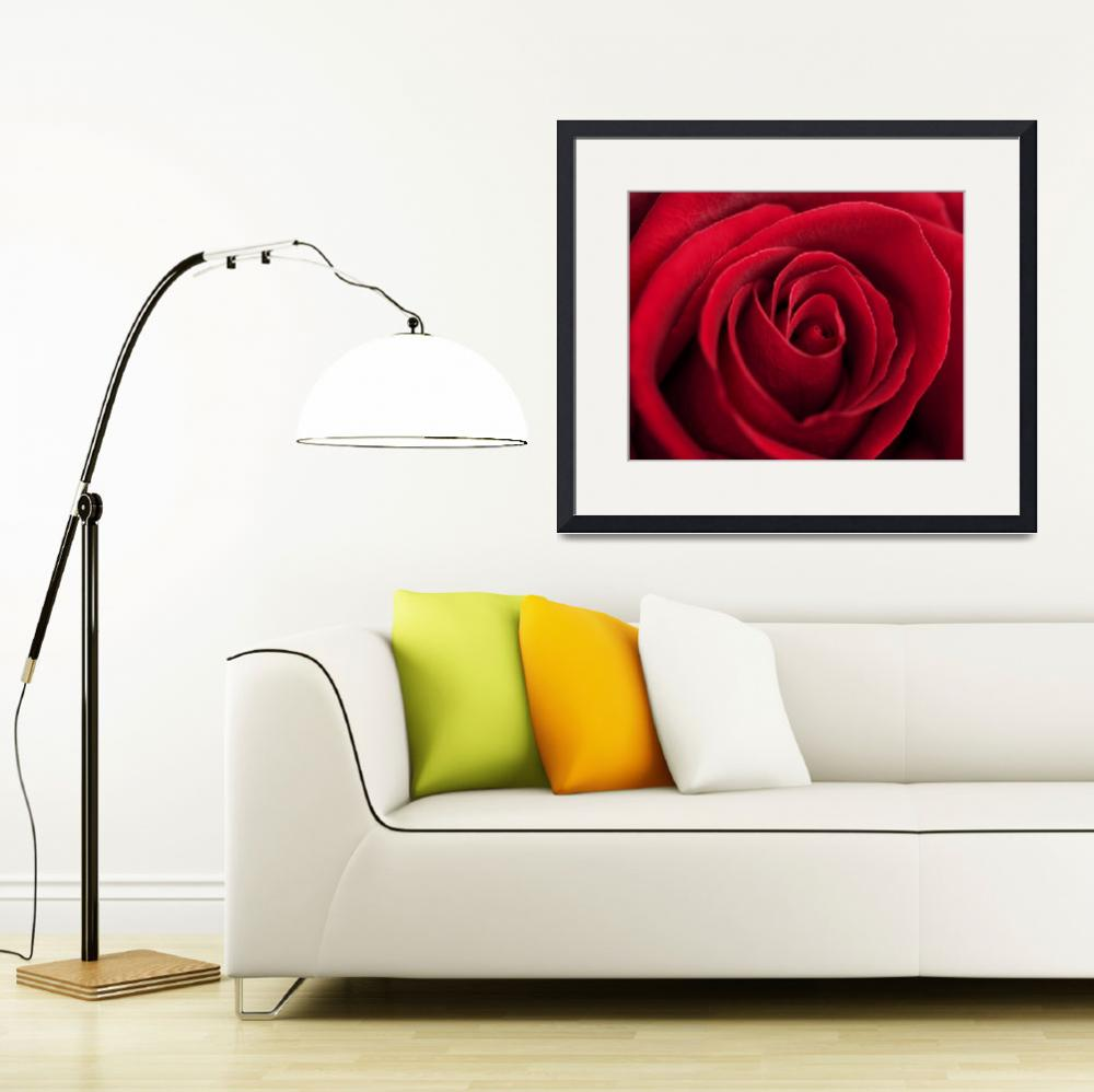 """""""""""All My Love"""" Red Rose&quot  (2015) by SoulfulPhotos"""