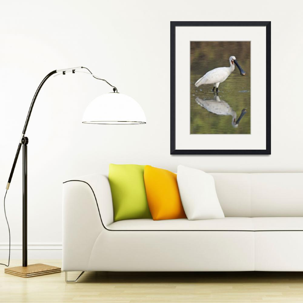 """""""Eurasian spoonbill Platalea leucorodia in a lake&quot  by Panoramic_Images"""