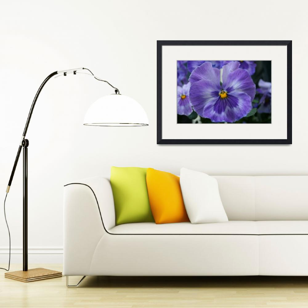 """""""Purple Pansy&quot  (2011) by LoLoGoGo"""