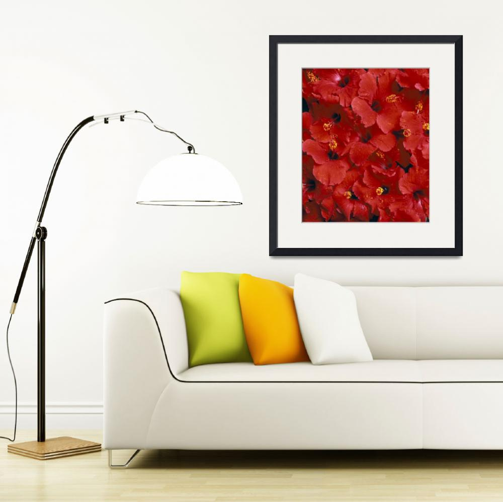 """""""Red Hibiscus Flowers Overlapping Each Other, Studi""""  by DesignPics"""