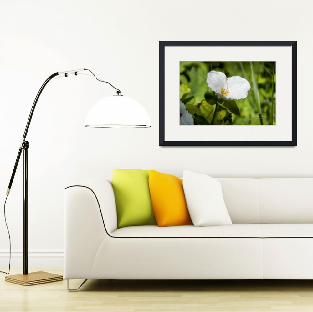 """""""TRILLIUM WHITE LARGE-FLOWERED&quot  (2010) by tricia"""