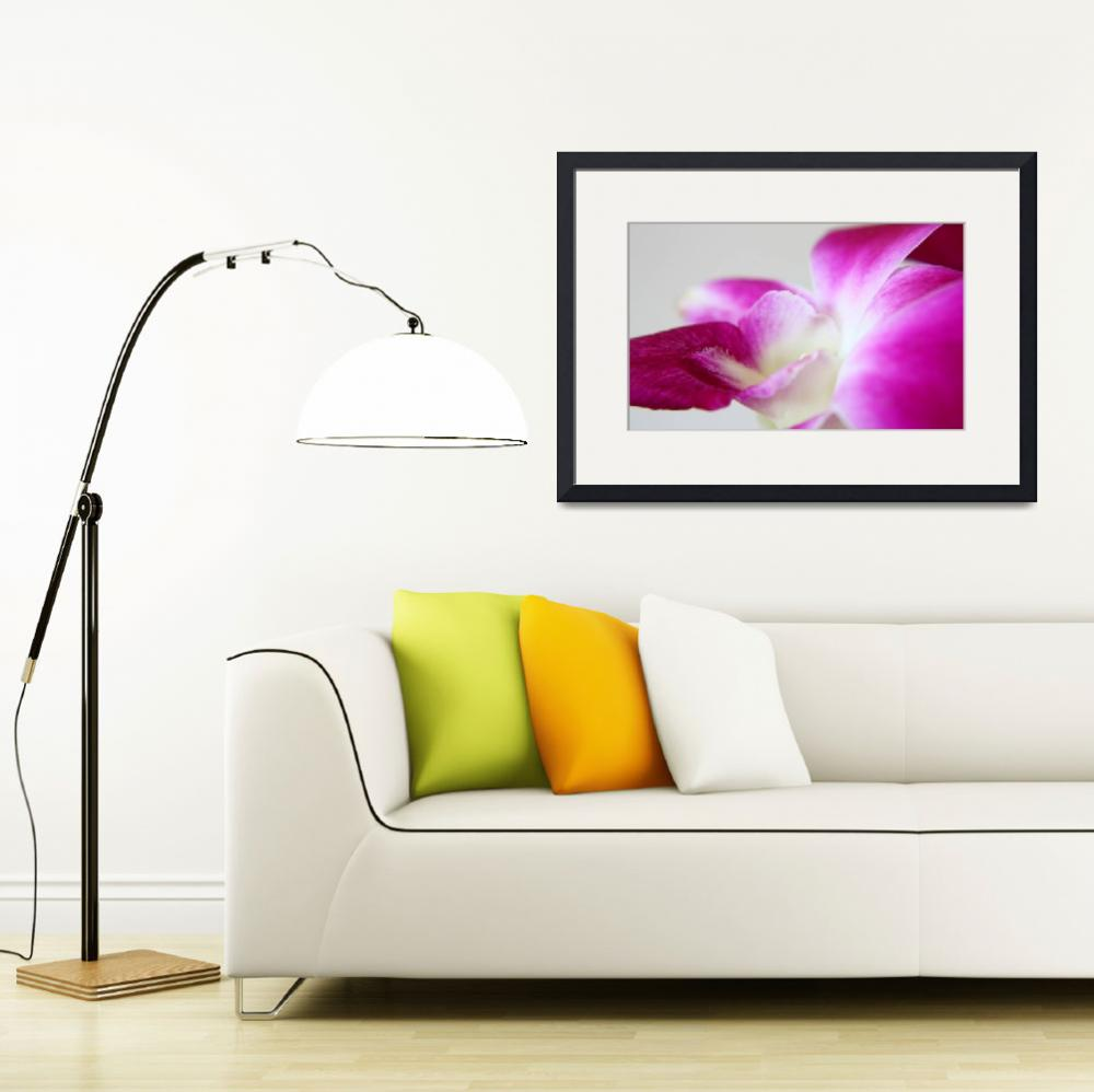 """""""Magenta Dendrobium Orchid&quot  (2009) by Vanpinni"""