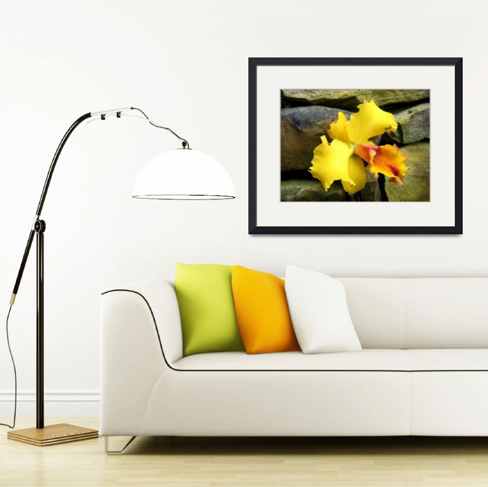 """yellow orchid&quot  (2009) by derekmccrea"