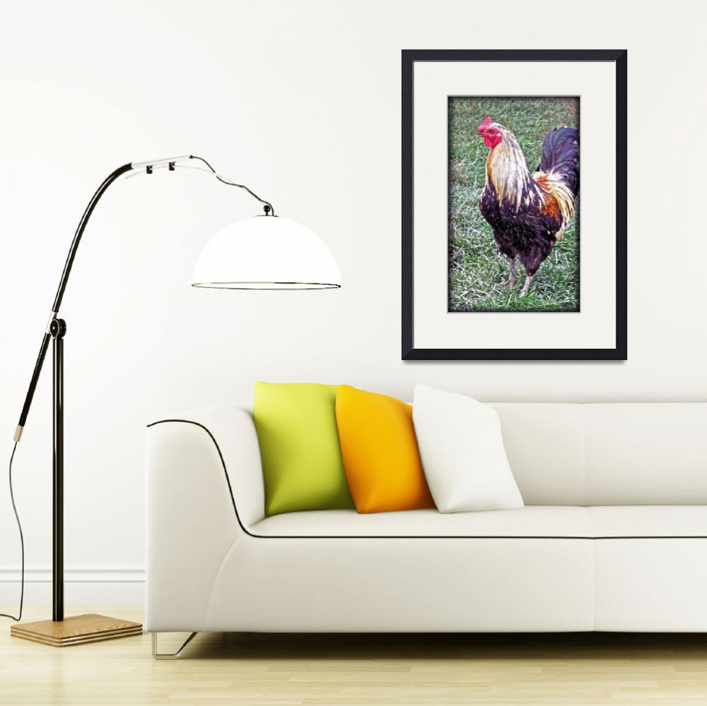 """""""Unfriendly Rooster&quot  (2011) by MissDawn"""