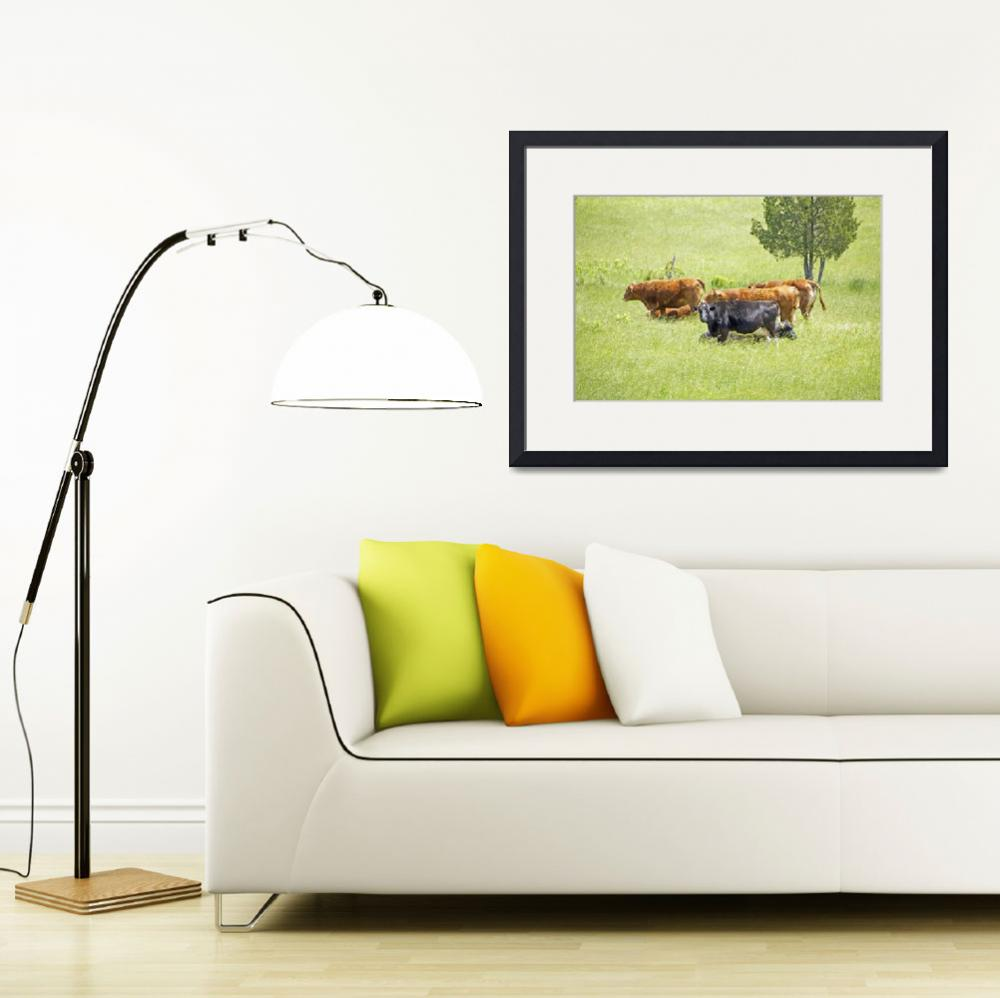 """""""Cows and Beeves In Summer Field&quot  (2014) by MotherNature1"""