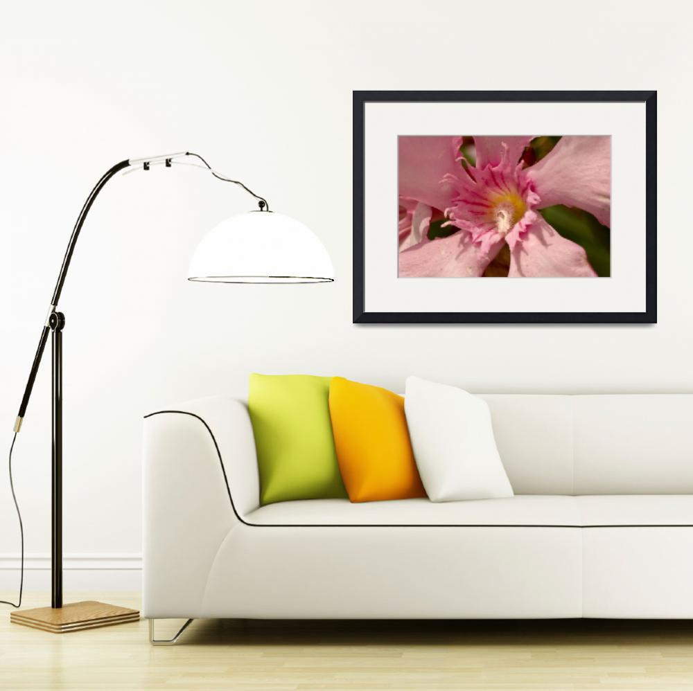 """""""Pink Oleander&quot  (2010) by MindsEyeImagery"""