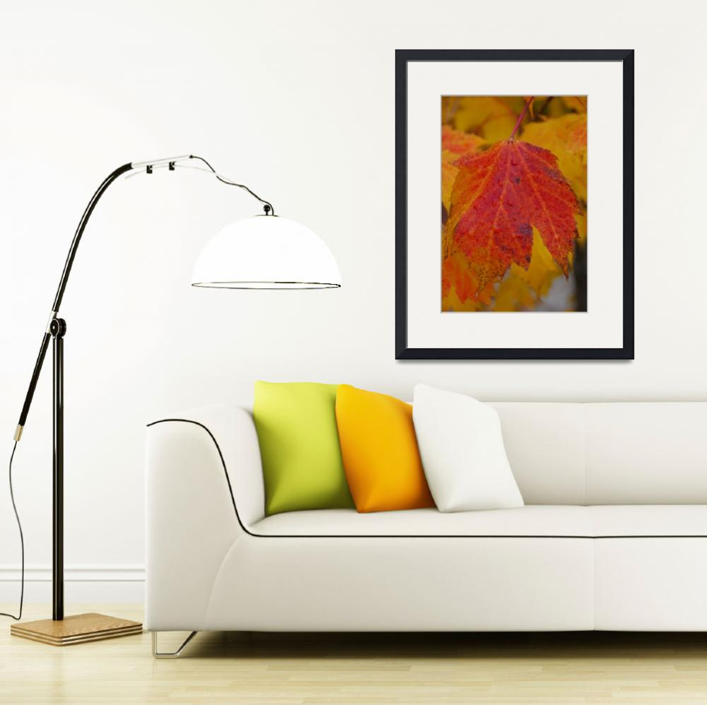 """""""Colorful Fall Leaves&quot  (2009) by william200549"""