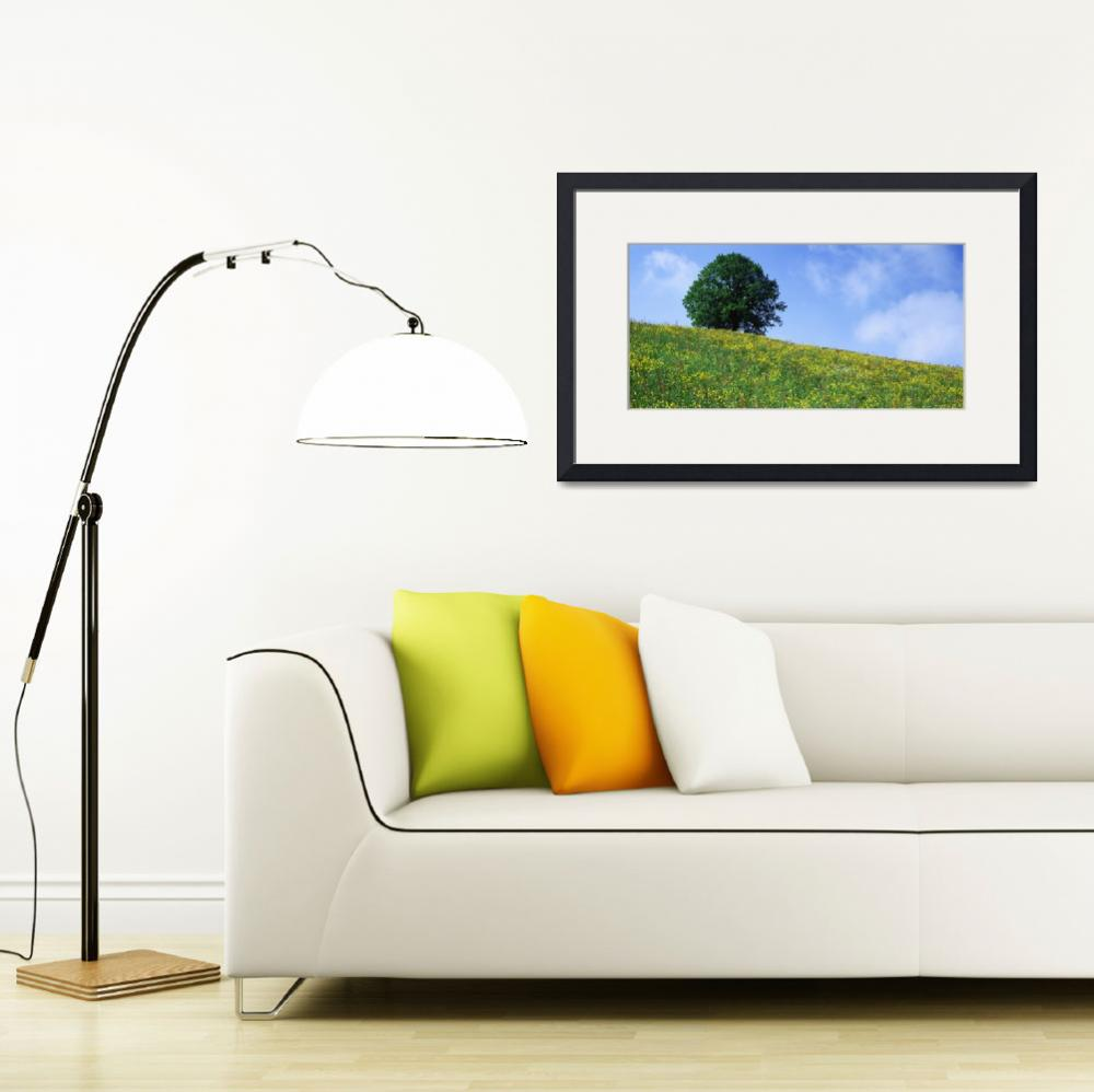 """""""Green Hill w/ flowers and tree Canton Zug  Switze&quot  by Panoramic_Images"""