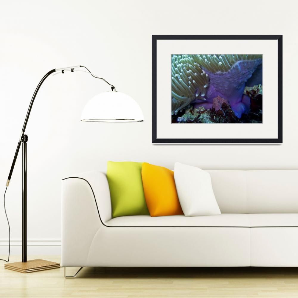 """""""Purple Anemone on Victor Coral Head&quot  (2008) by Mac"""