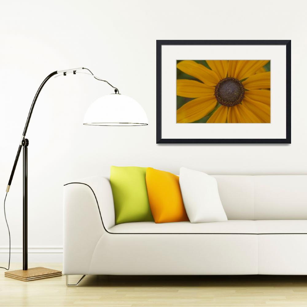 """""""Black Eyed Susan Closeup&quot  (2007) by SederquistPhotography"""