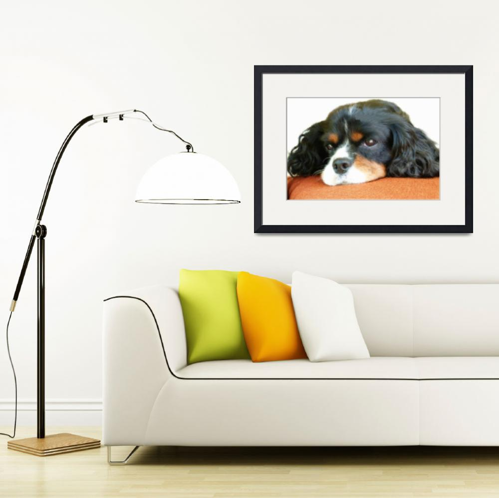 """CAVALIER KING CHARLES SPANIEL&quot  (2011) by shaynaphotography"