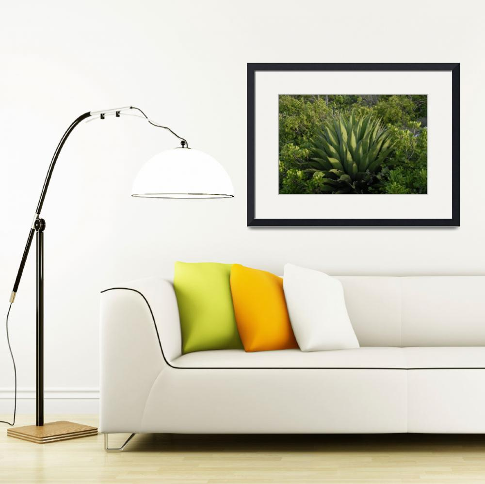 """""""Wild Cayman Islands Exotic Plant Life&quot  by RonScott"""