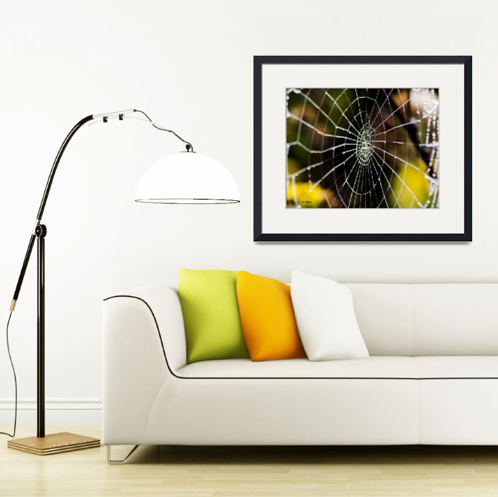 """""""Spider Web with Dew&quot  (2013) by awsheffield"""