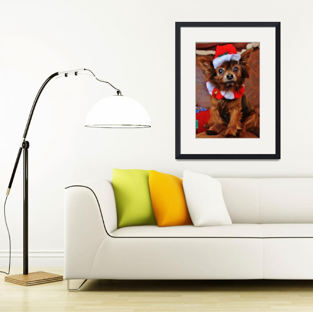 """""""Dog in Santa Hat&quot  (2012) by FotoMeister"""