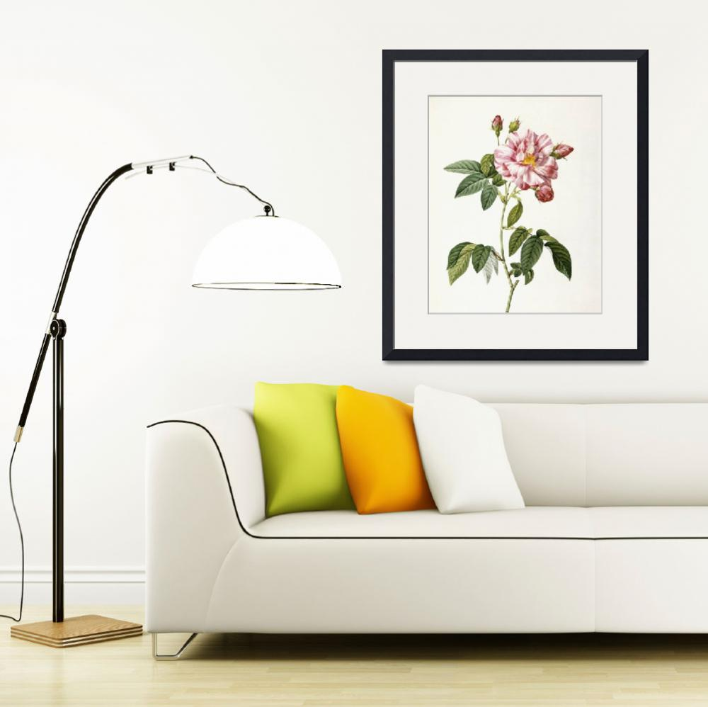 """Rosa Gallica Versicolor (Rosa mundi rose)&quot  by fineartmasters"