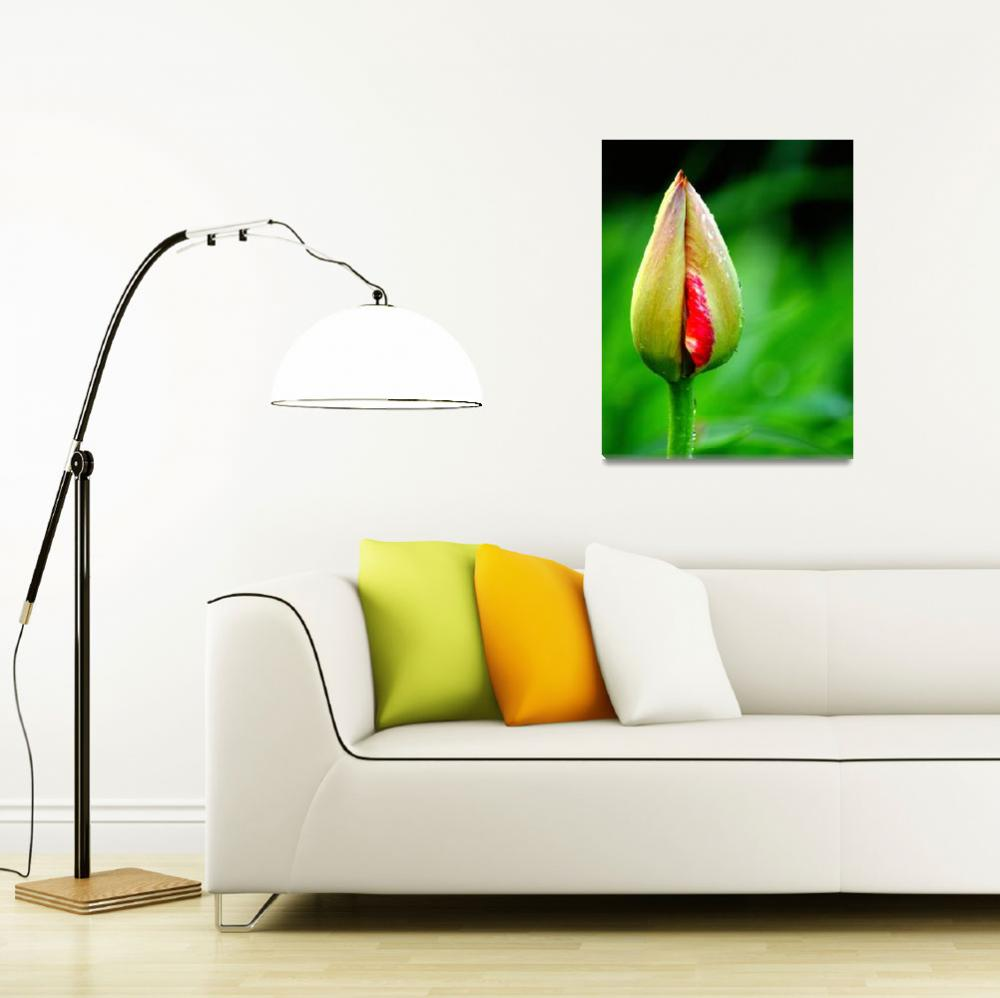 """Tulip Bud""  (2014) by joanhan"