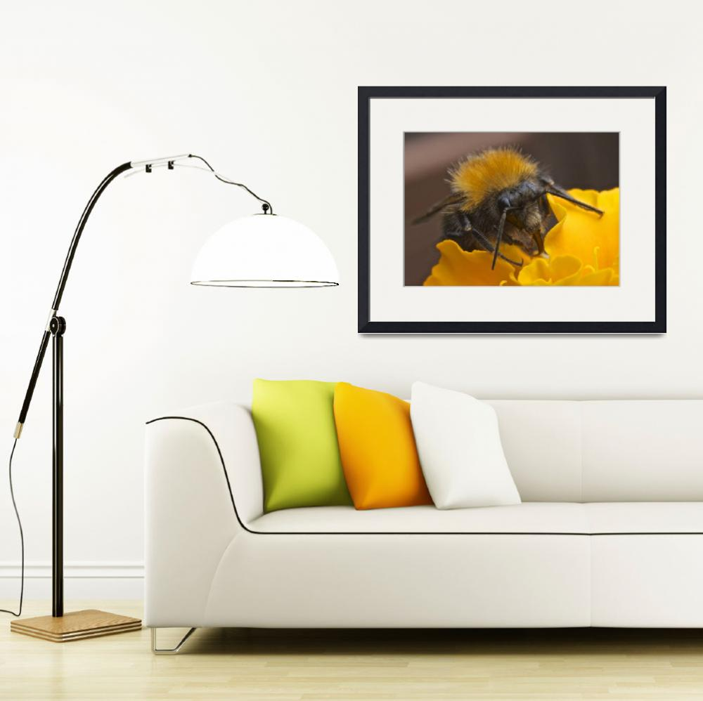 """""""Bumble Bee""""  (2013) by RCLPhotography"""