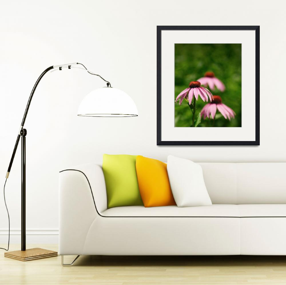 """""""Great Coneflower, Rudbeckia Maxima&quot  by Dick_Wood"""