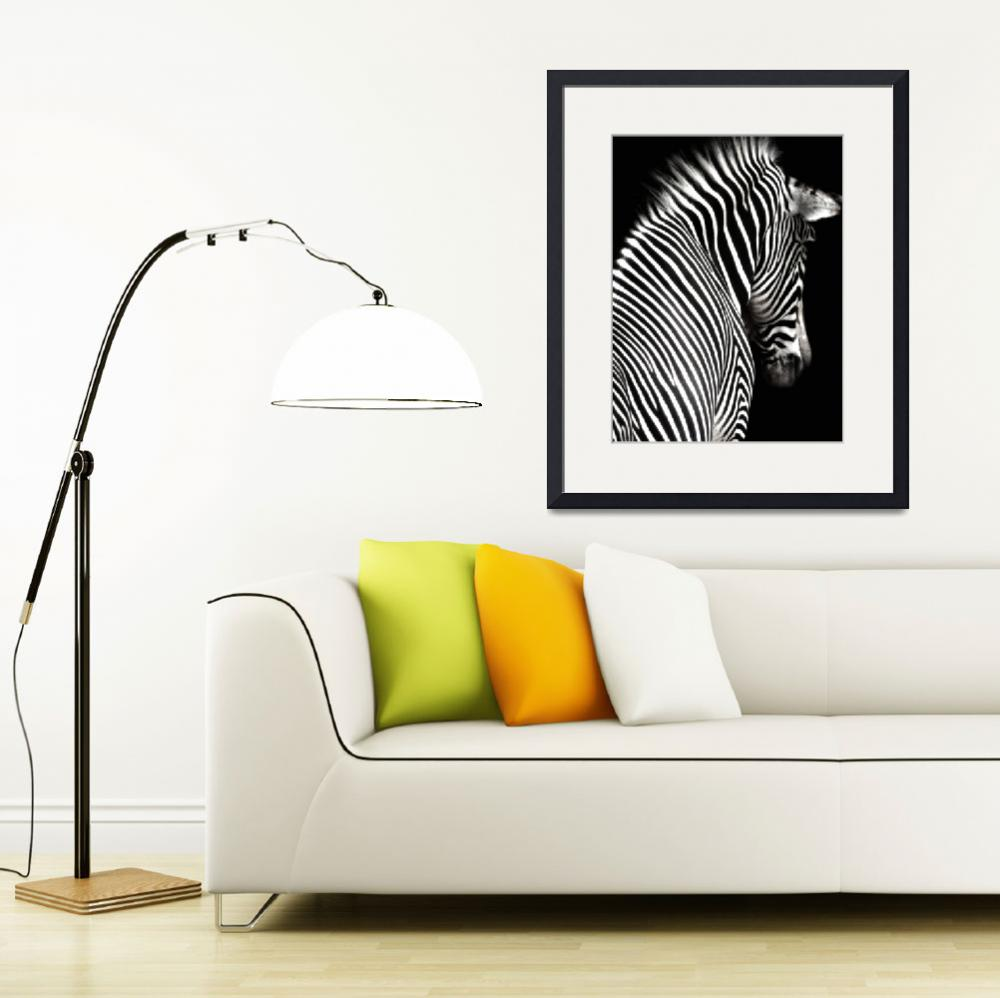 """Black and White Zebra with Black Background&quot  (2009) by walbyent"