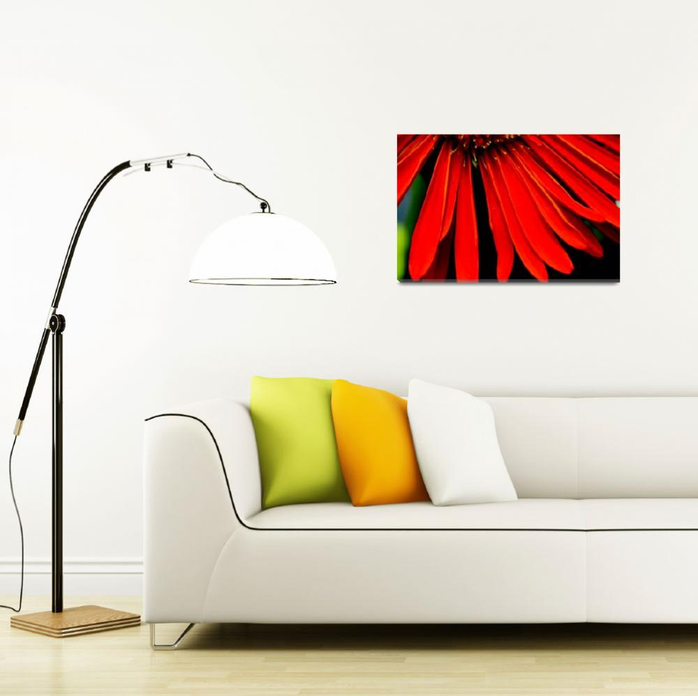 """Red Gerbera""  (2009) by csquared"