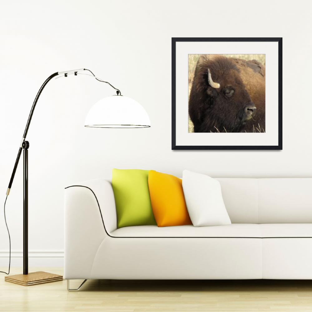"""""""Bison""""  (2012) by justnaturephotography"""