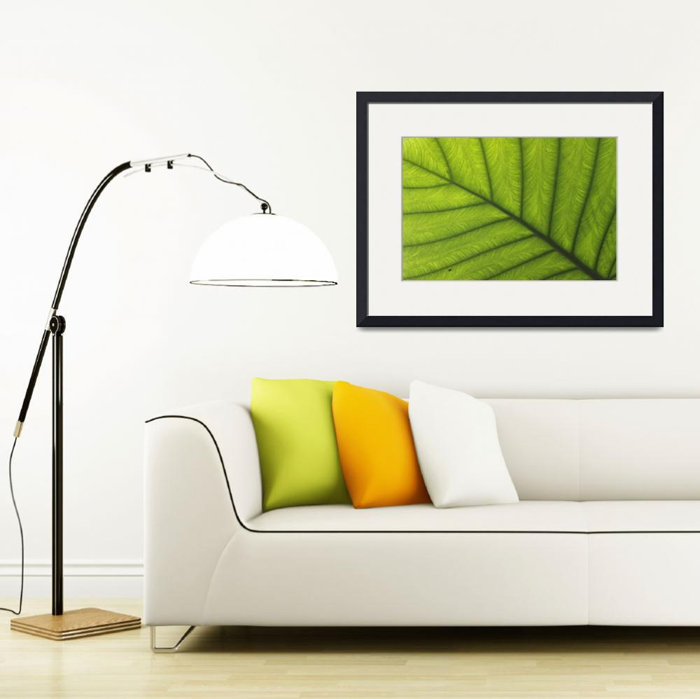 """""""Green Tropical Leaf with Dew&quot  (2012) by AnneSoule"""