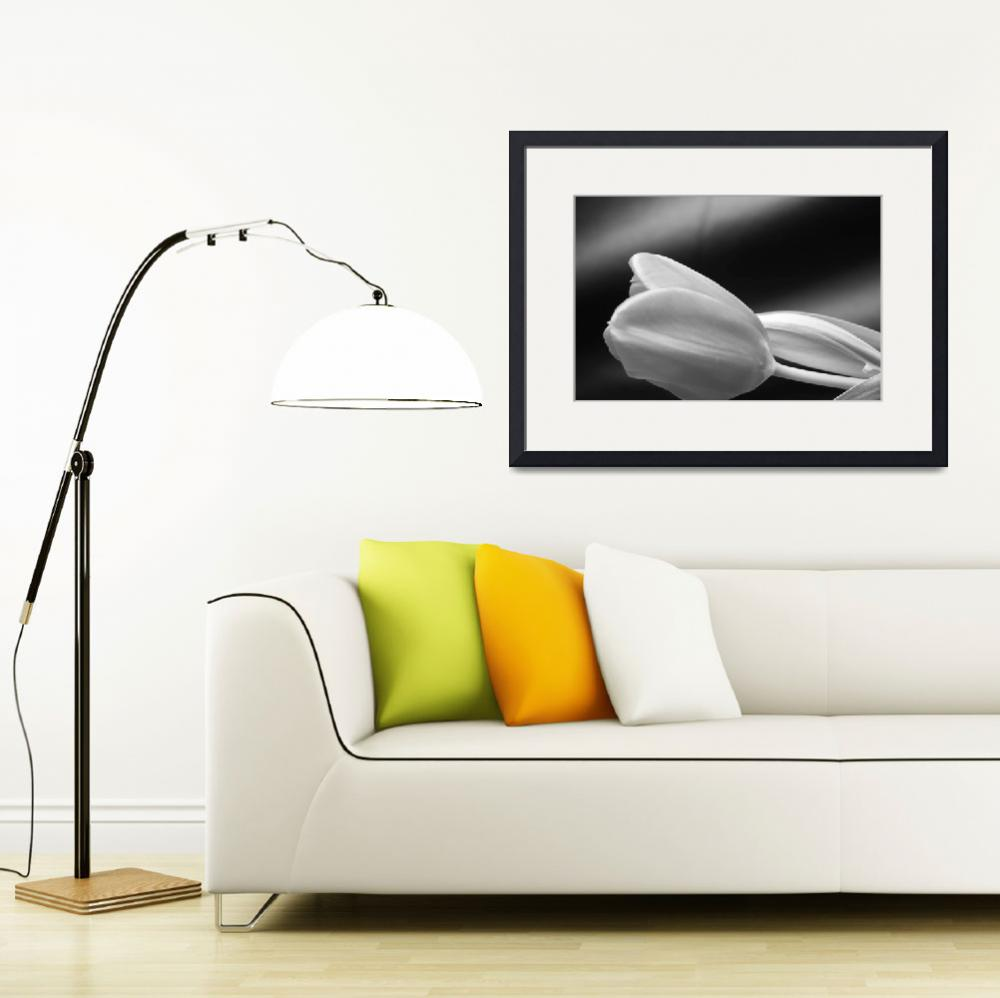 """""""Tulip in black and white 2""""  by MichelePickett"""