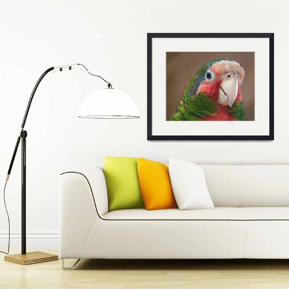 """""""Cayman Parrot&quot  (2016) by Gardenographer"""