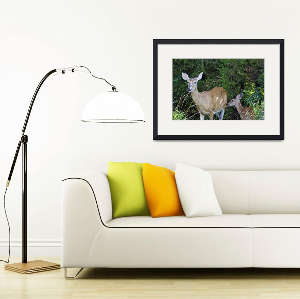 """""""Whitetail Deer - Doe & Fawn&quot  (2015) by MotherNature1"""