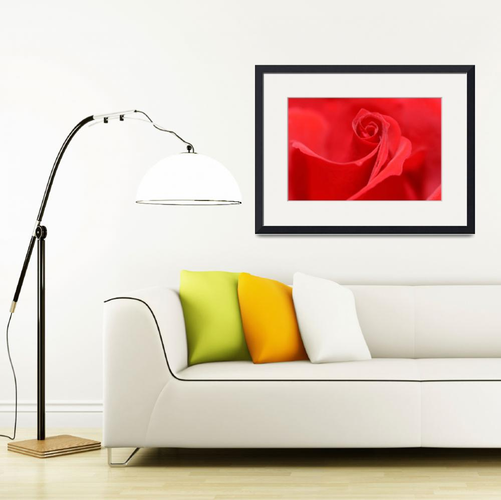 """""""Red Rose&quot  (2007) by dennissmithphotographic"""