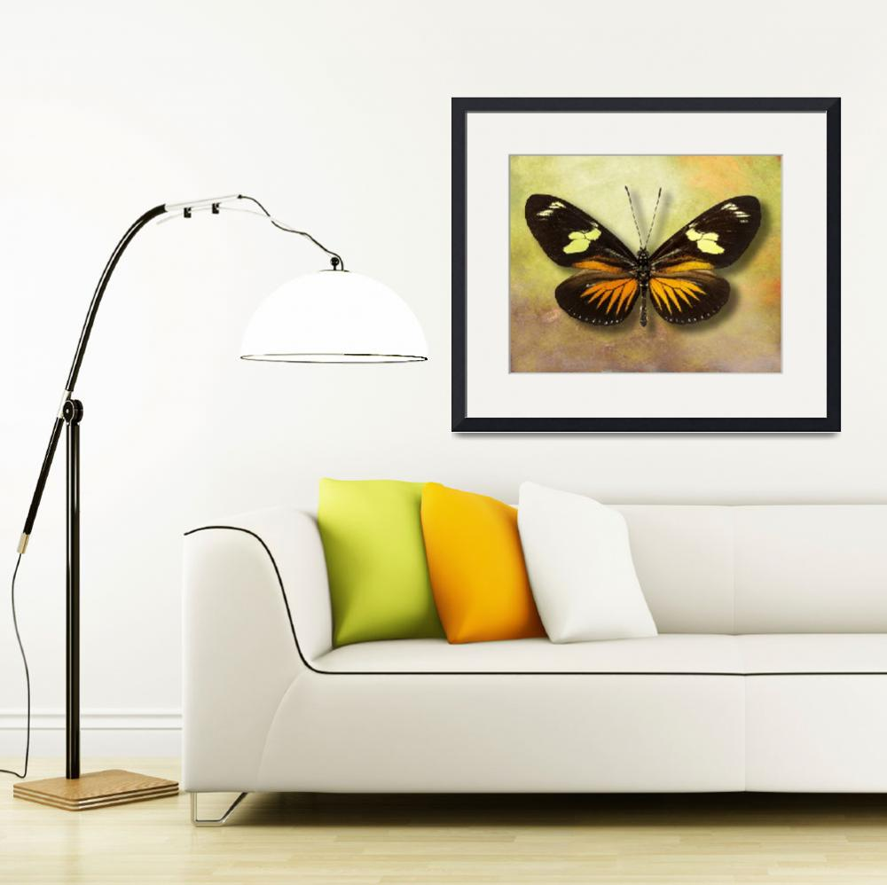 """Heliconius doris eratoniu Butterfly or The Postman&quot  (2014) by vincent-field_photography"