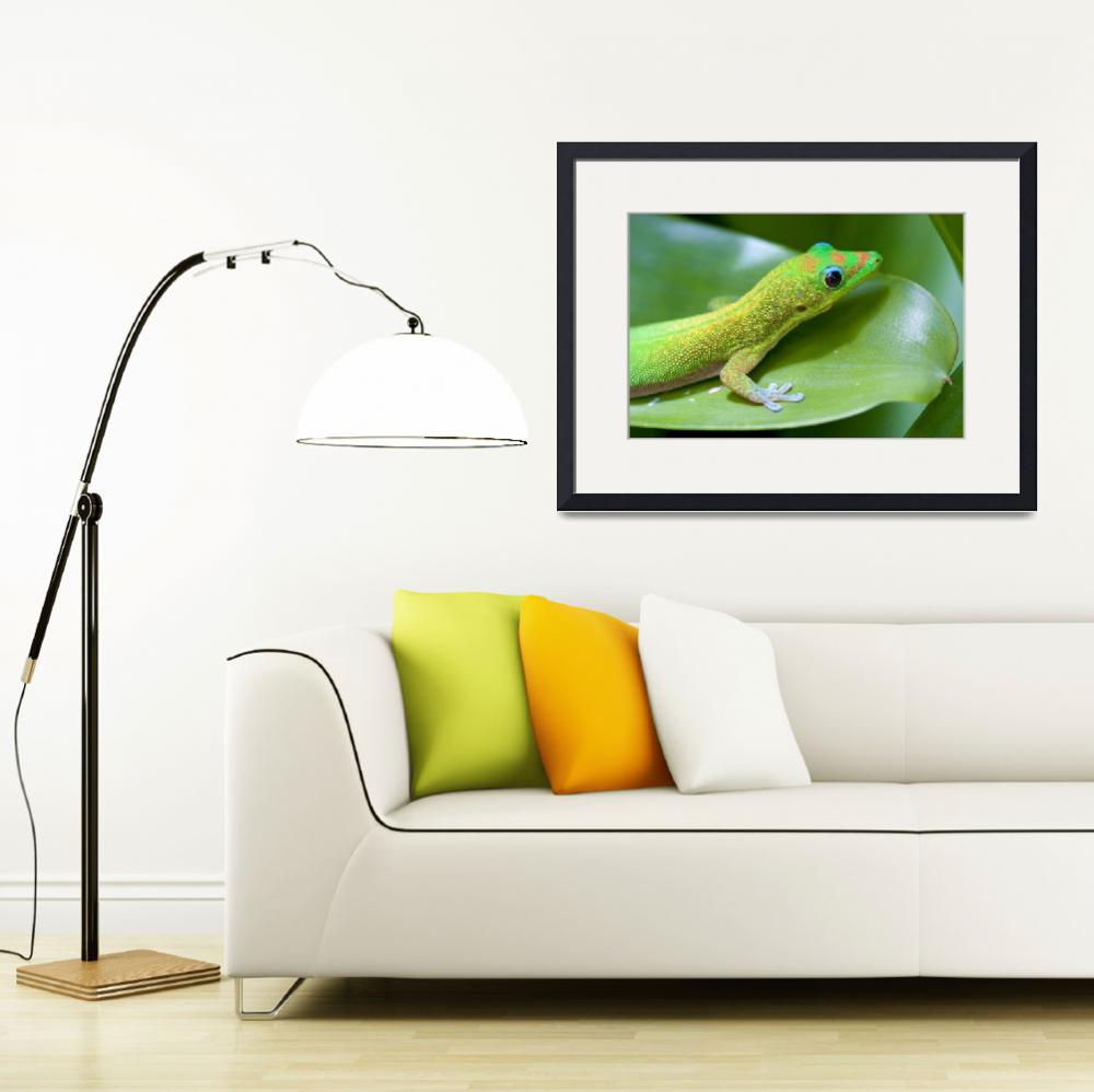"""Hawaiian Gold Dust Gecko&quot  (2008) by ThomasArt"