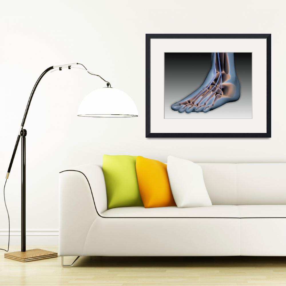 """""""Conceptual image of human foot with nervous system&quot  by stocktrekimages"""