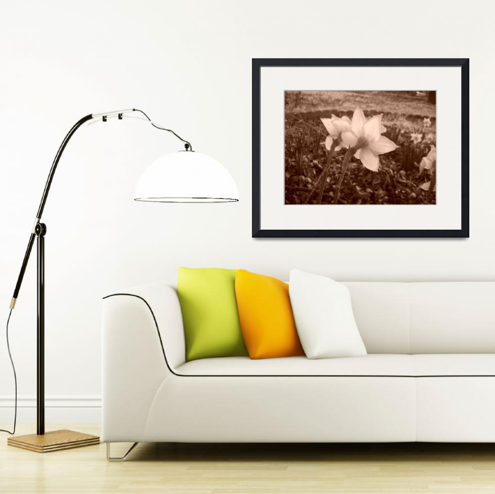 """""""Daffodils in Sepia&quot  (2009) by MichaelClydeEllis"""
