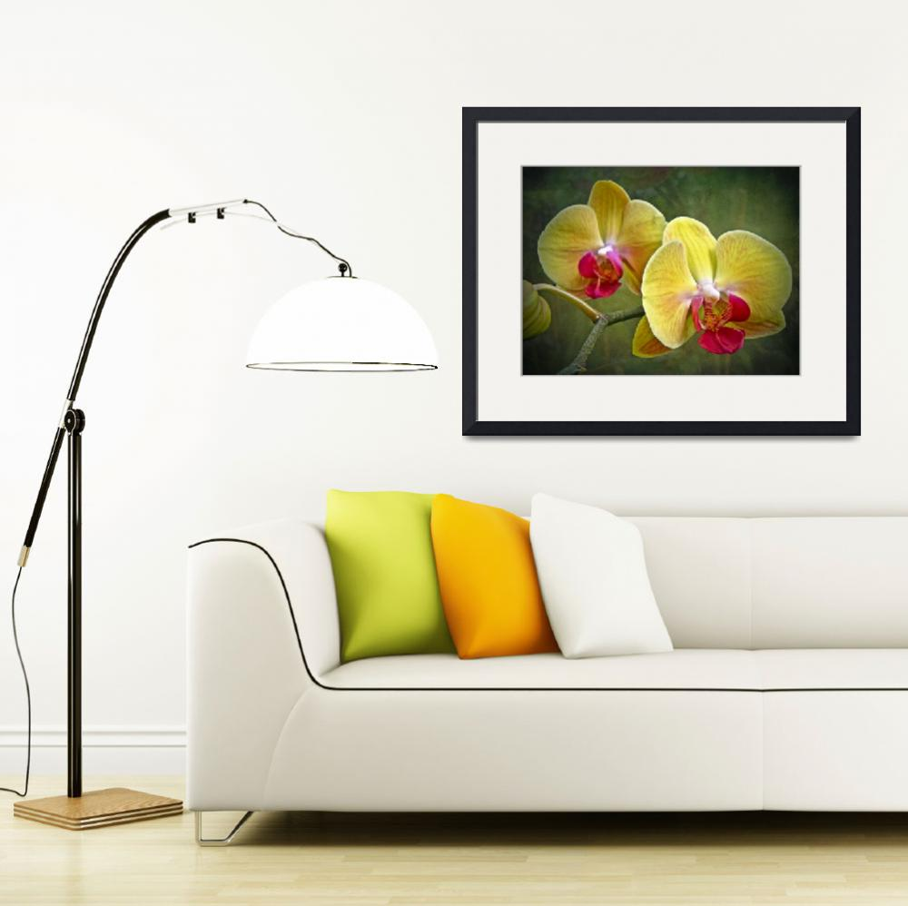 """""""Yellow Moth Orchid - Phalaenopsis""""  (2013) by MotherNature1"""